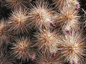 six pack: cactus at Finca Padre -- photo by Sienna M Potts, Sonoran Desert, 2 May 2006