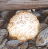 intricately decorated mushroom growing on a log on the Bitterroot River
